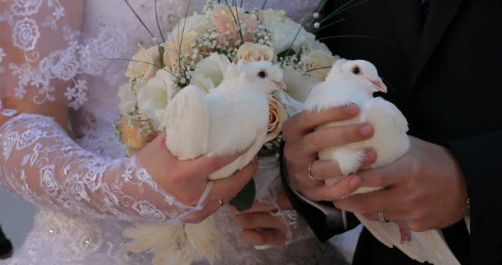 porumbei nunta